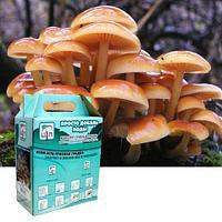 Комплект для выращивания грибов дома «Просто добавь воды» от Центра Экологических Программ (Опята зимние)