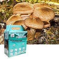 Комплект для выращивания грибов дома «Просто добавь воды» от Центра Экологических Программ (Опята мраморные)