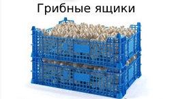 Ящики для грибов и дрожжей