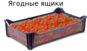 Ящики для перевозки ягод