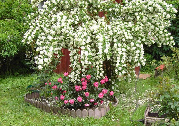 Посадка Пересадка декоративных кустарников - фото 1