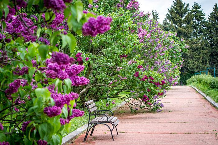 Посадка Пересадка декоративных кустарников - фото 3