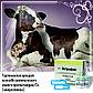 Эстрофан 0,25 мг/мл:синтетический аналог простагландина F2a  (клопростенола) с лютеолитическим аффектом, фото 2