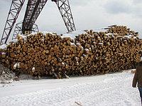 Пиловочник хвойных и лиственных пород (круглый лес, кругляк) ГОСТ 9463-88, ГОСТ 9462 -88