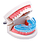 G-Tooth Trainer для выпрямления зубов, фото 3