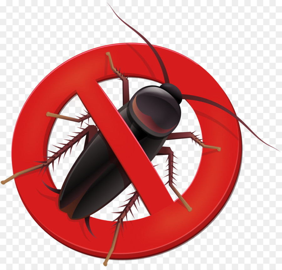 Дезинсекция от насекомых