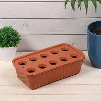 Лоток для выращивания зелёного лука, 29 x 16 x 8,5 см, 10 лунок, терракотовый