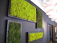 Озеленение любых вертикальных поверхностей