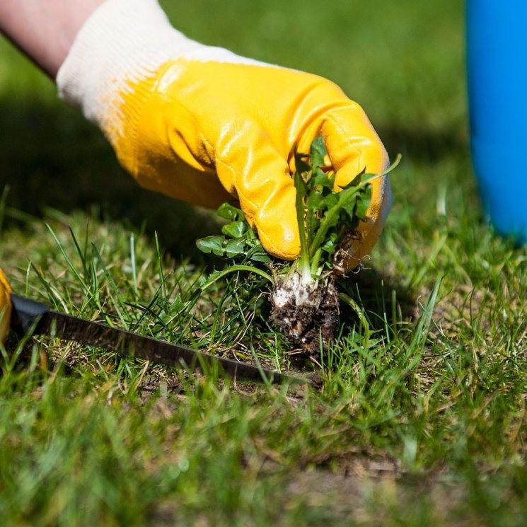 Химическое уничтожение сорняков
