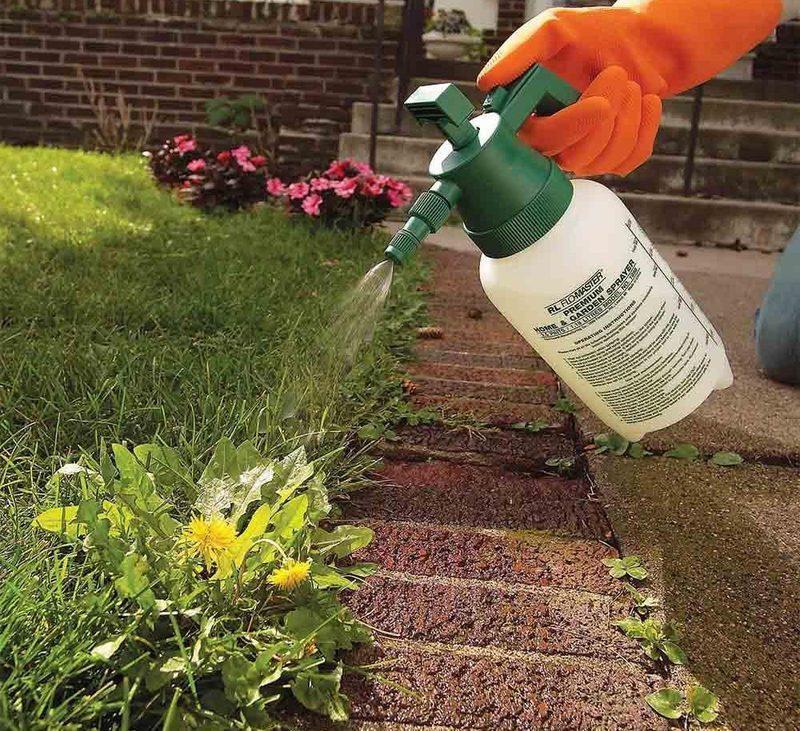 Уничтожение сорняков гербицидами сплошного действия