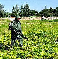 Уничтожение многолетних сорняков