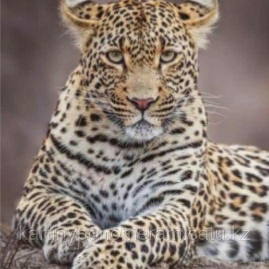 "Картина по номерам ""Леопард перед охотой"""