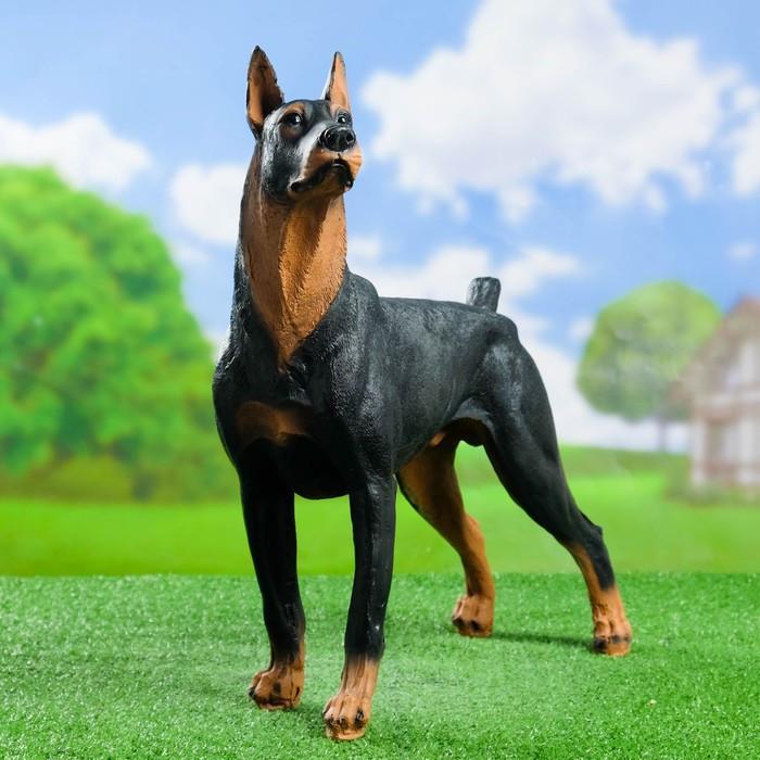 """Садовая фигура """"Собака Доберман"""" большой стоит 20*48*48 см"""
