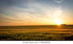 Продажа Земли сельхозного назначения.