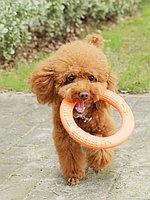 Жевательная игрушка для собак