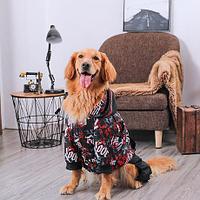 Спортивный костюм для собак