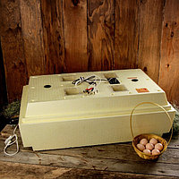 Инкубатор бытовой «Золушка», на 98 яиц, автоматический переворот, 220 В/12 В