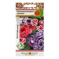 Семена цветов Глоксиния махровая 'Бархат' F1, смесь, 5 шт (комплект из 10 шт.)