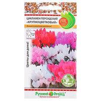 Семена комнатных цветов Цикламен персидский Крупноцветковый, 5 шт (комплект из 10 шт.)