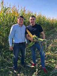 Тастобе Агрофуд кукурузное поле