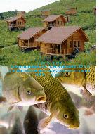 Бизнес-план «Организация туристического комплекса и рыбоводческого хозяйства»