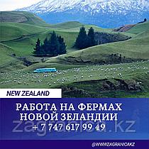 РАБОТА НА ФЕРМЕ/NEW ZELAND