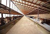 БИЗНЕС-ПЛАН «Создание животноводческого комплекса, включая ферму мощностью 100 голов КРС и 200 голов МРС