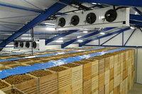 БИЗНЕС-ПЛАН инвестиционного проекта «Создание овощехранилища на 600 тонн»