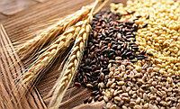Бизнес-план: Создание бизнеса по выращиванию кормовых сельскохозяйственных культур в Туркестанской области