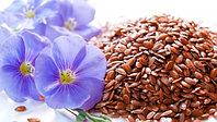 Бизнес-План Проекта «Выращивание льна масличного»