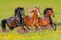 Бизнес-План Проекта «Разведение и реализация лошадей»