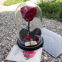 Роза в колбе стандарт красная 22 см