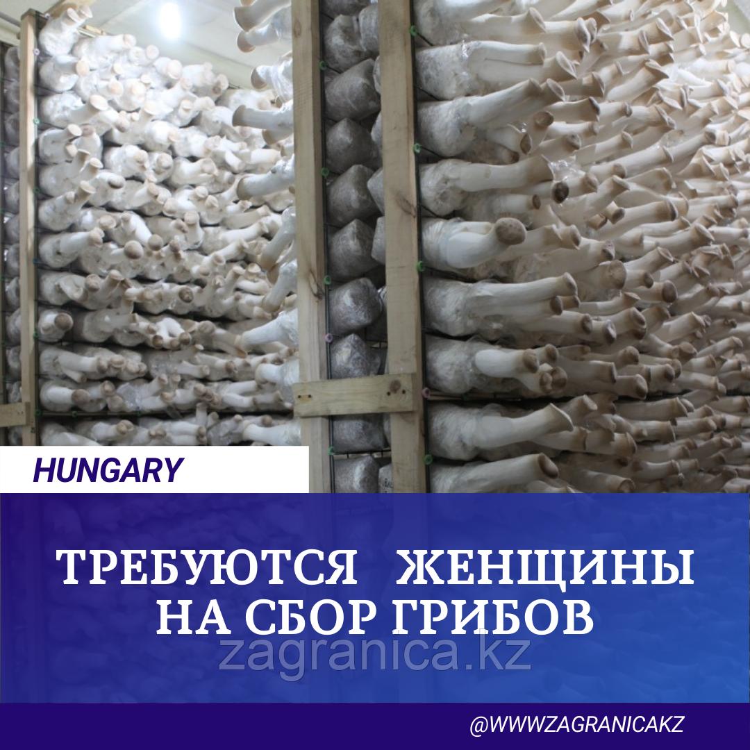 ТРЕБУЮТСЯ СБОРЩИЦЫ ГРИБОВ/ HUNGARY