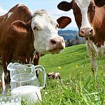 Гигиена в молочном животноводстве