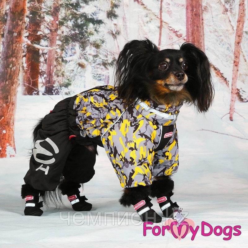 FW850-2020 M, For My Dogs, Фор Май Дог, Зимний комбинезон серо/жёлтый, для мальчиков - фото 4