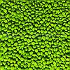 Мастербатч зеленый GREEN MG61534