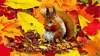 Осень: мы всегда активны и бодры!