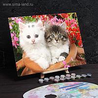 "Роспись по номерам без подрамника ""Котята"", 30 х 40 см"