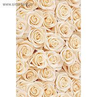 """Фотообои Moda Interio """"Кремовые розы"""" (из 2-х листов), 1,8 х 2,7м"""