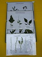 Сорные растения 24 видов