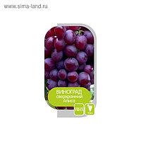 Саженец винограда Алиса, 1шт , Весна 2021