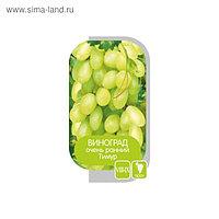 Саженец винограда Тимур, 1шт , Весна 2021