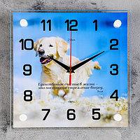 """Часы настенные, серия: Животный мир, """"Белый лабрадор"""", 25х25 см"""