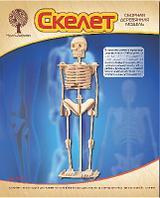 Сборная деревянная модель «Скелет человека»