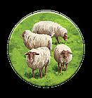 Настольная игра: Каркассон 9: Холмы и овцы, фото 6