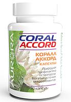 Коралл-Аккорд (Coral-Accord), Аврора, 90 капсул