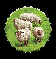 Каркассон 9: Холмы и овцы, фото 7