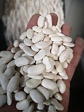 Фасоль белая 9 мм