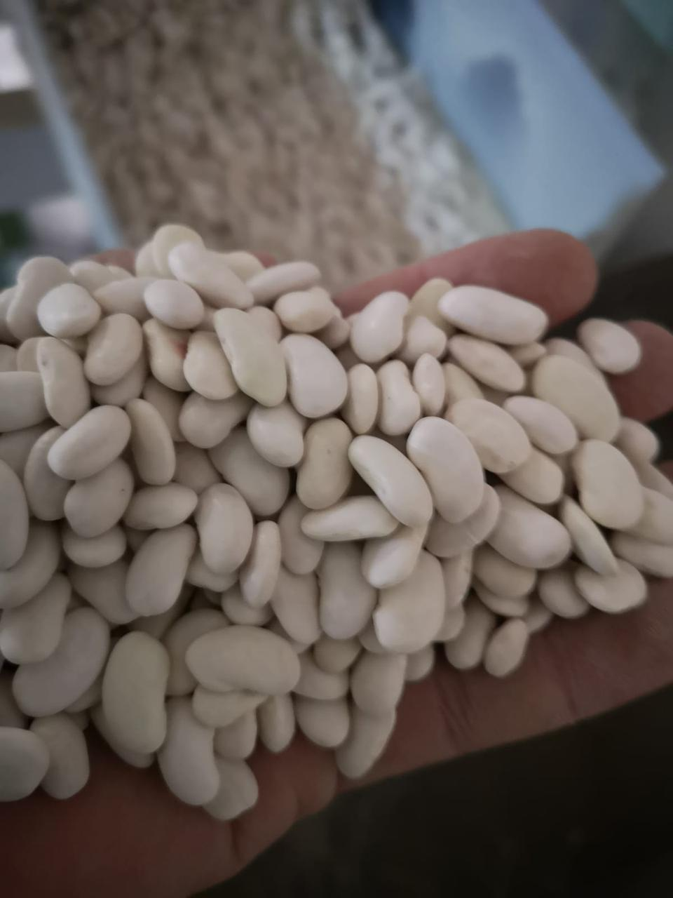 Фасоль белая 8 мм
