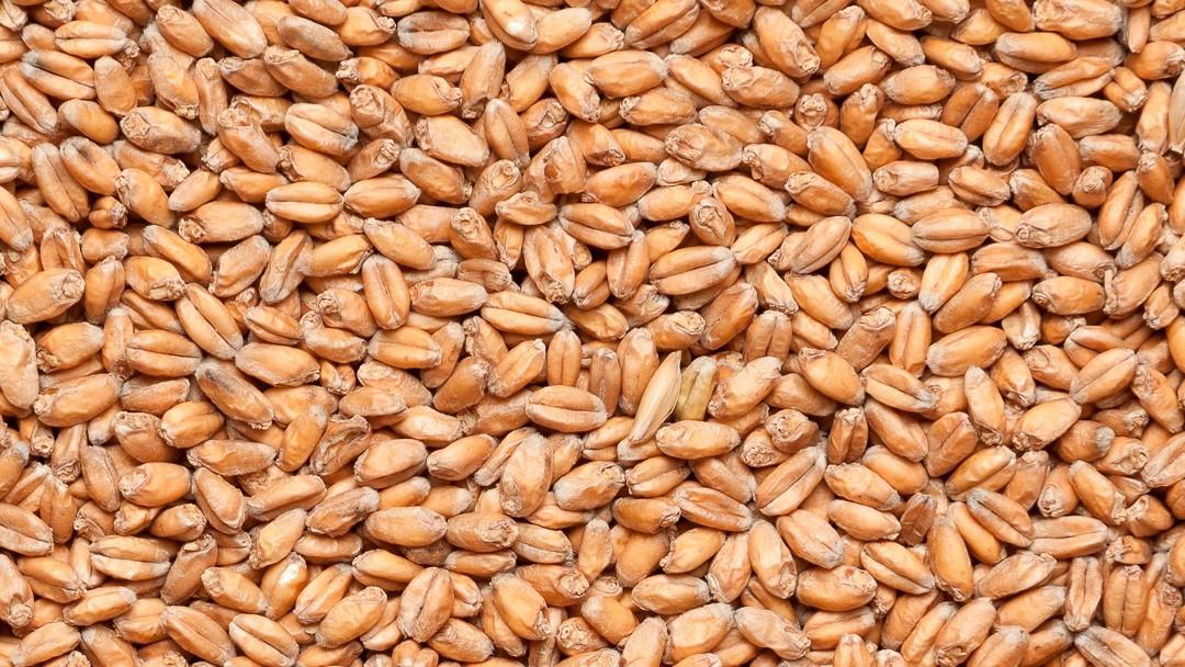 Солод пшеничный средней обжарки 1кг